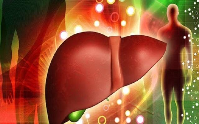 Gan đóng vai trò quan trọng giúp thải độc cho cơ thể